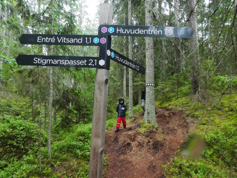 Tivedens nationalpark vandring i vilda skogar   FREEDOMtravel